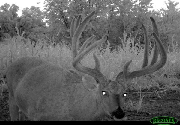 Pike_County_Illinois_Whitetail_Trail_Cam_Photos_Past_442