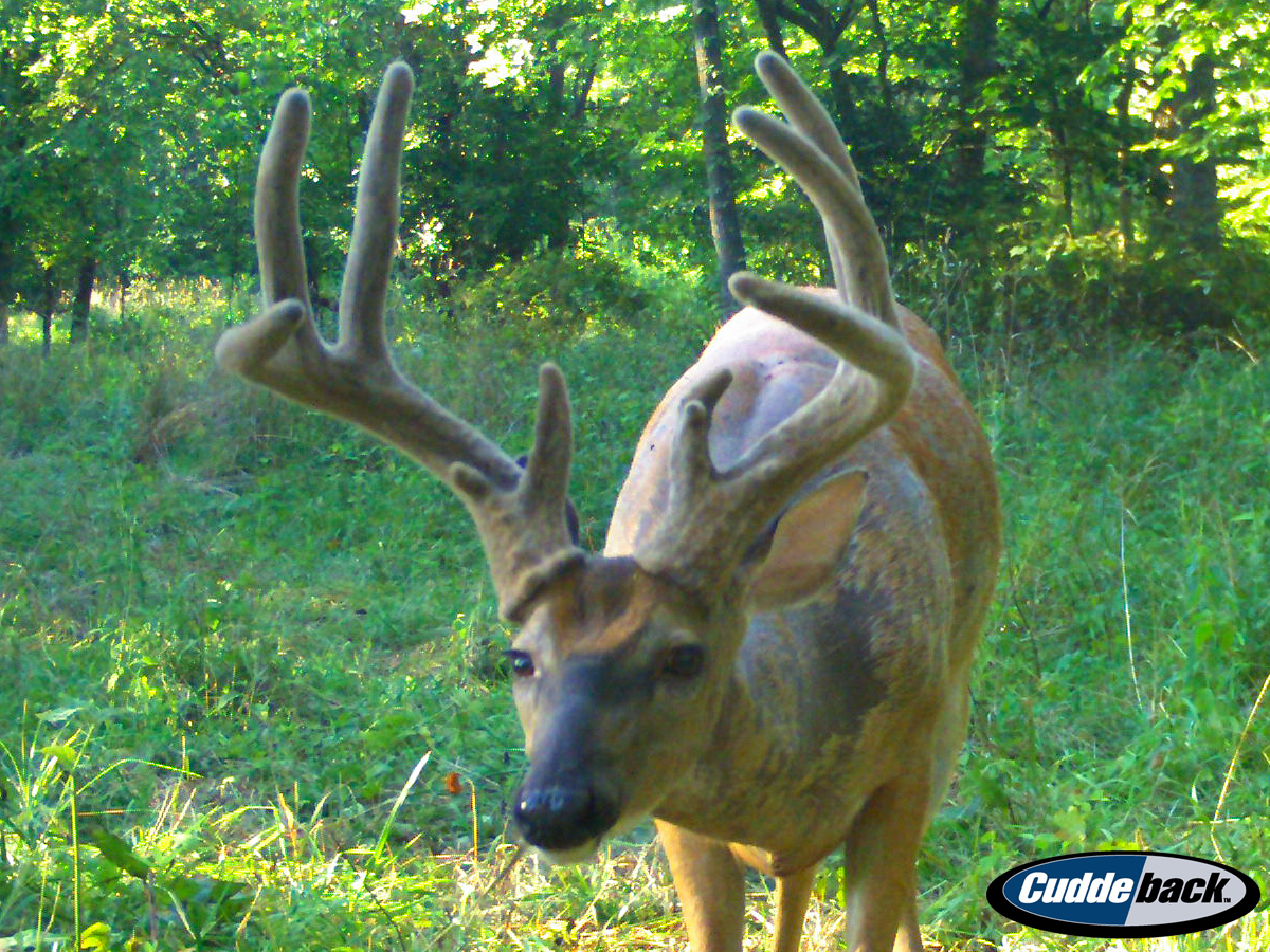 The Giant Whitetails That Made it Through Hunting Season
